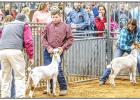 Young County Jr. Livestock Highlights 2020